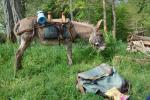 Agrandir l'image Balade et randonnée avec un âne