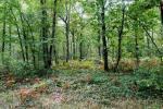 Promenade dans la forêt domaniale de Châteauroux