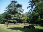 Agrandir l'image Parc du Château de Jallanges