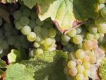 Agrandir l'image Domaine viticole Clos de l'Aumônière
