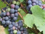 Agrandir l'image Domaine du Vieil Orme - Domaine vinicole