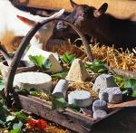 Agrandir l'image Elevage de chèvres et production de fromages